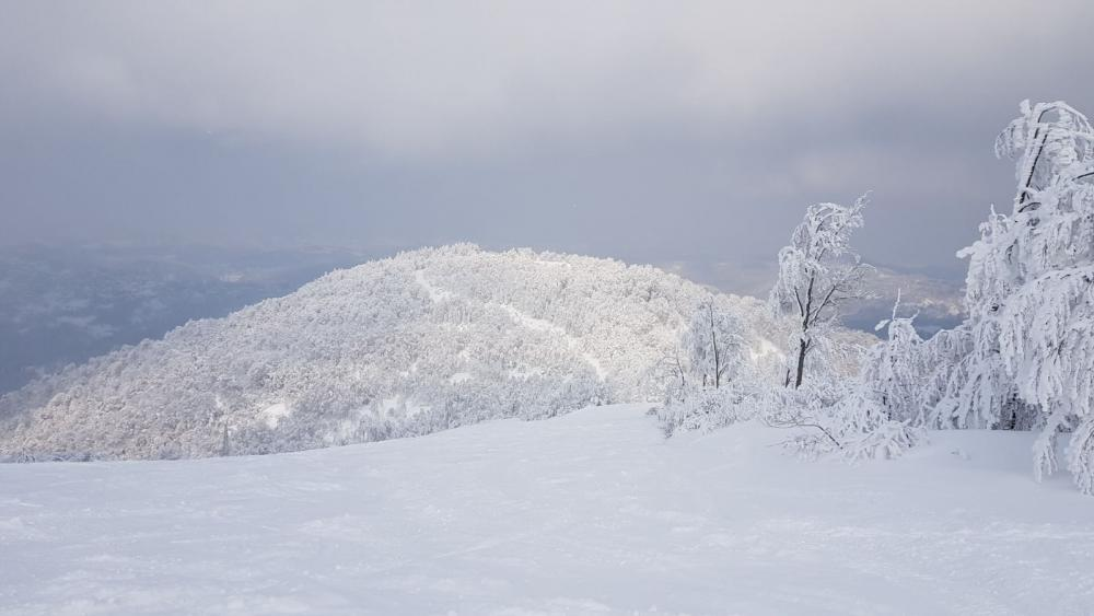 Sangiacomo e Cardini Ski